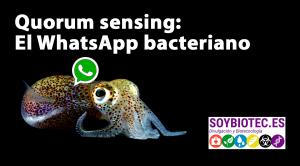 Portada artículo quorum sensing