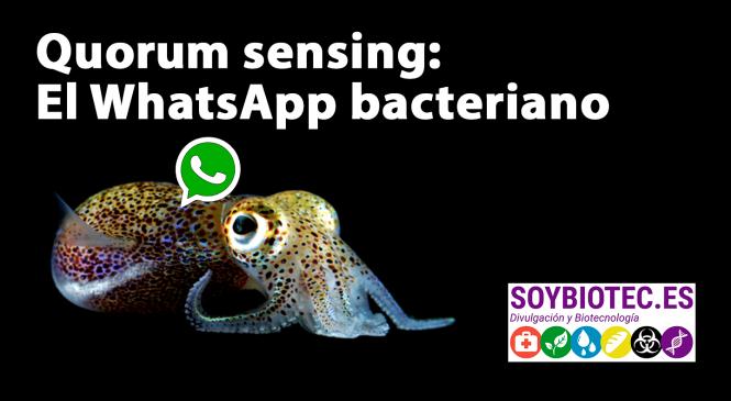 Quorum Sensing: el WhatsApp de las bacterias